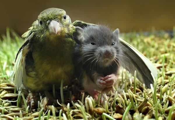 animalfriendsbirdmouse
