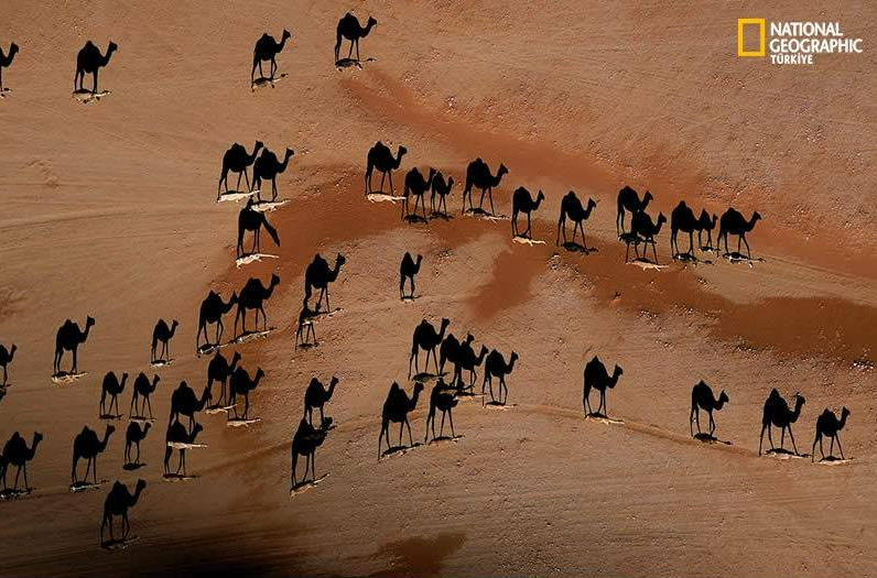 camels_shadow