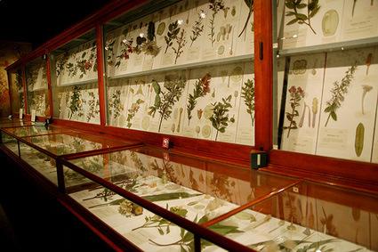 museum-flowers-1